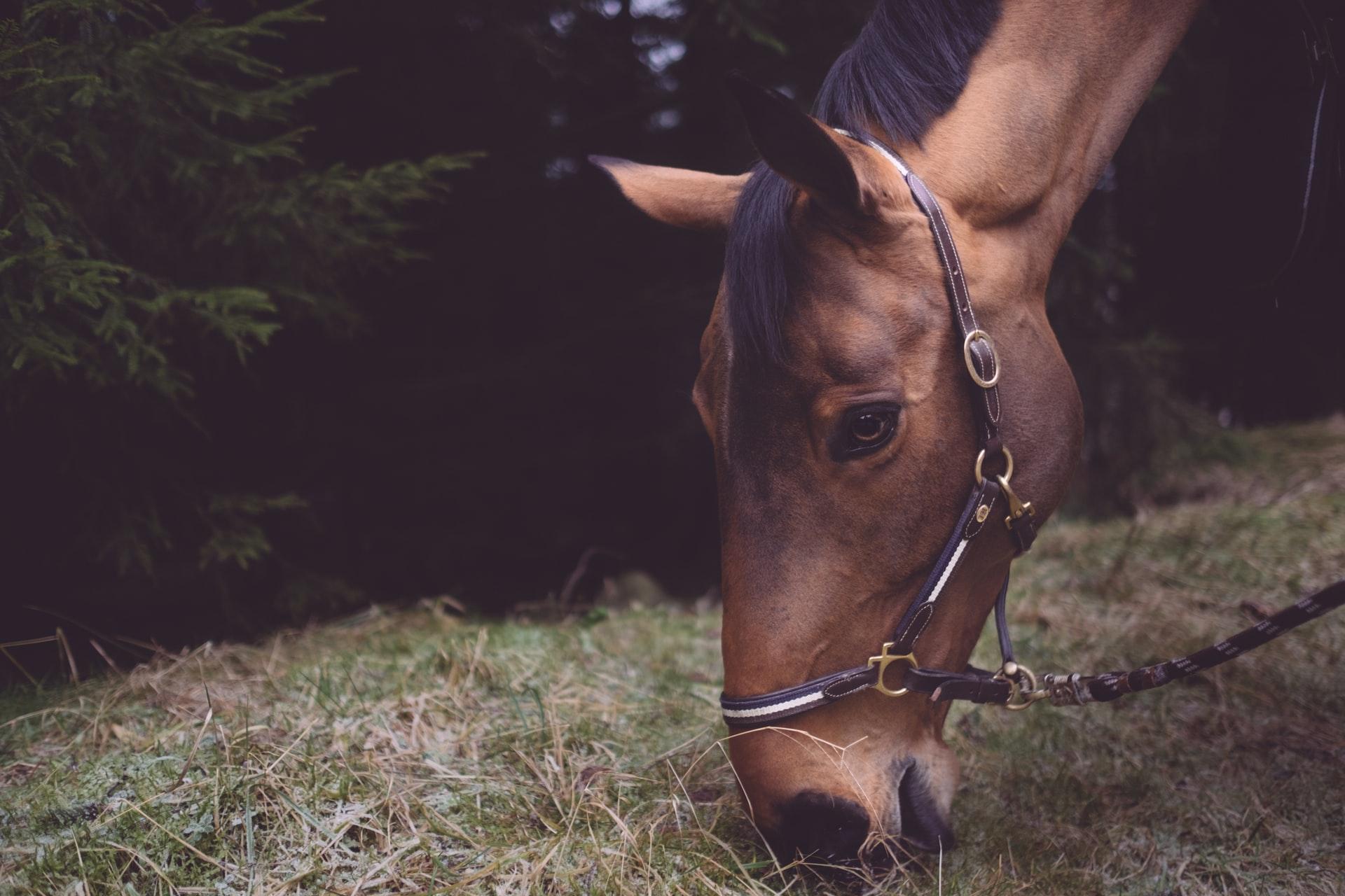 Find det grovfoder som passer bedst til din hest